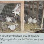 Tauben-Martyrium-1x
